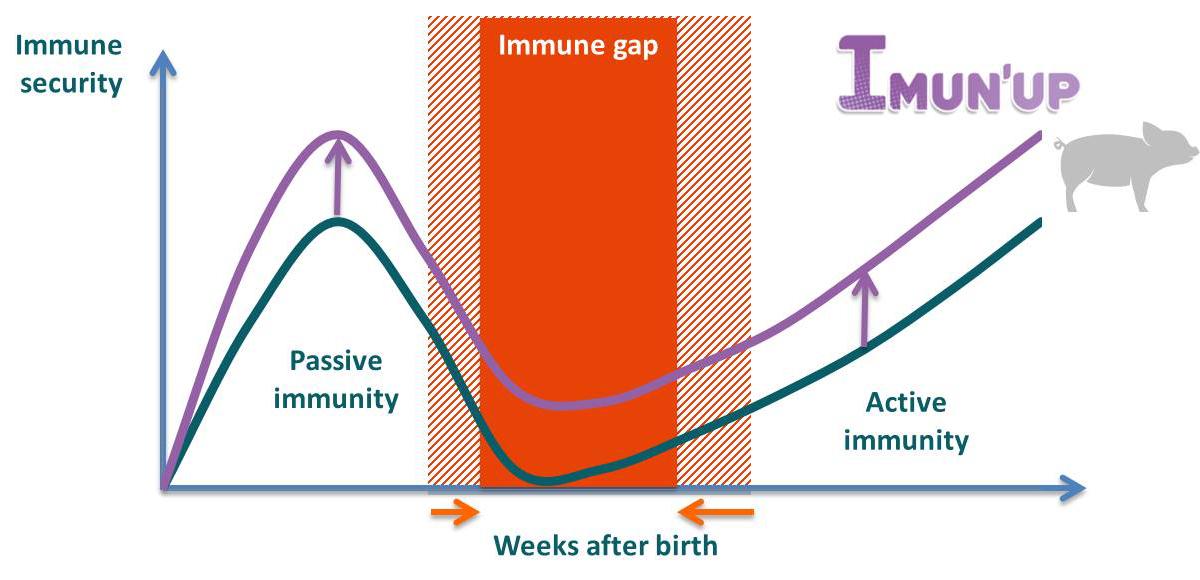 Immune security
