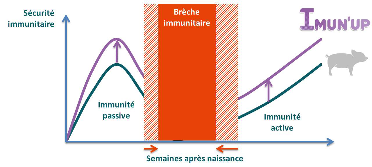 Brèche immunitaire