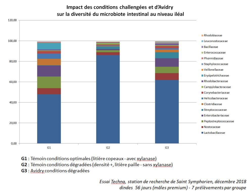 Impact des conditions challengées et d'Avidry sur la diversité du microbiote intestinal au niveau iléal