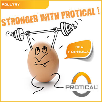 Protical egg shell