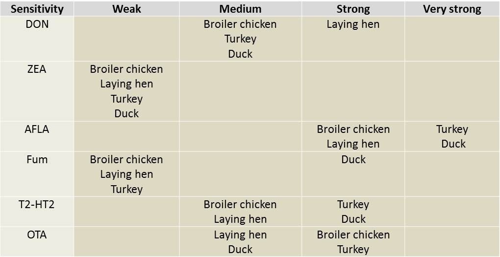 susceptibility of broiler, turkey, ducks, hen to mycotoxins