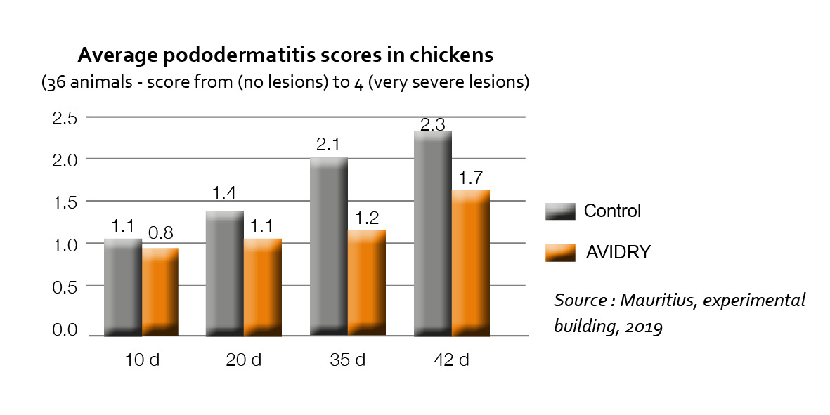 Average graph of pododermatitis scores in chicken from 0 to 4 on 36 animals Avidry product