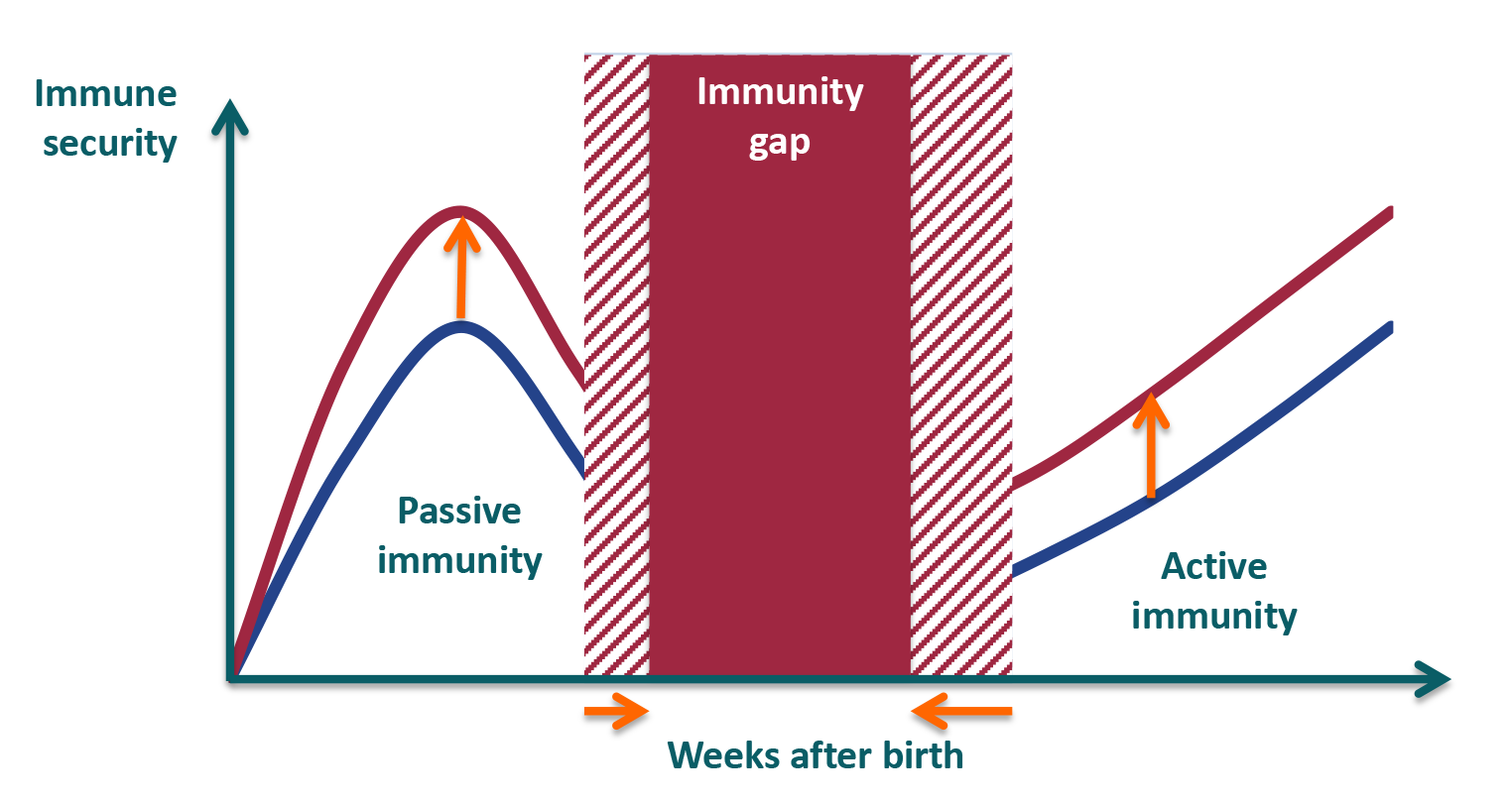 Imun up immune security passive active