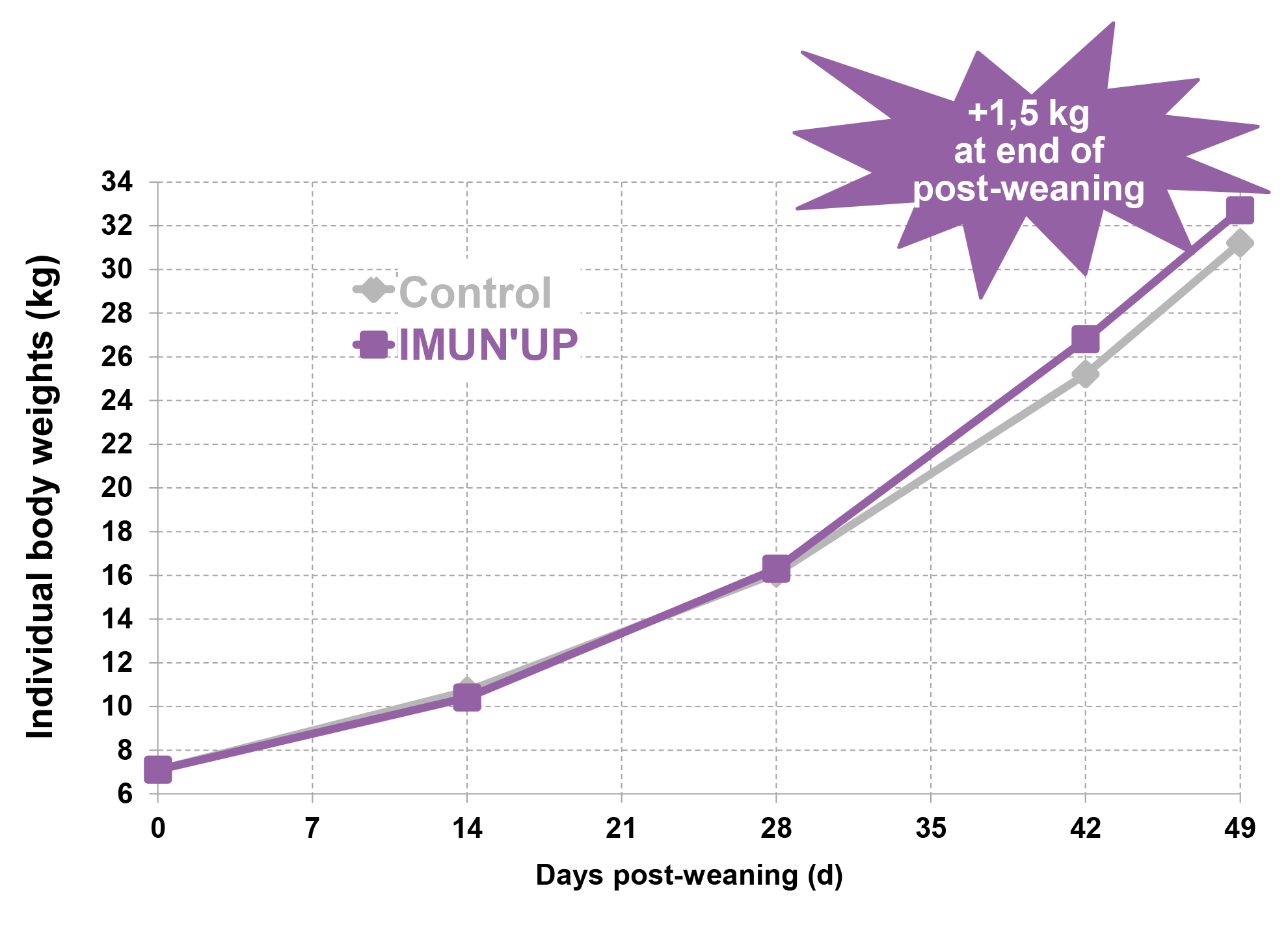 Imun up improve sows weight and piglet robustness