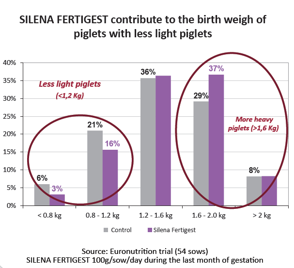 SILENA FERTIGEST improve birth weigh of piglets with less light piglets