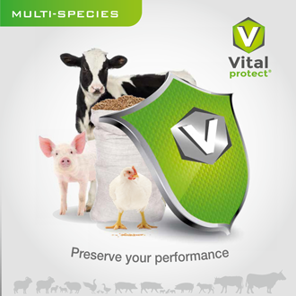 Vitalprotect reduce mycotoxin product