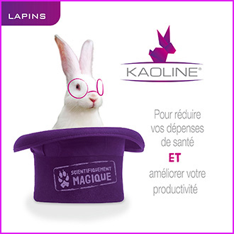 Kaoline: improves productivity in rabbit farming