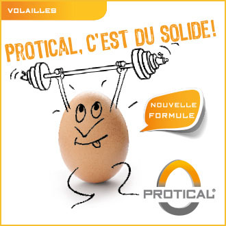 Protical coquille oeuf