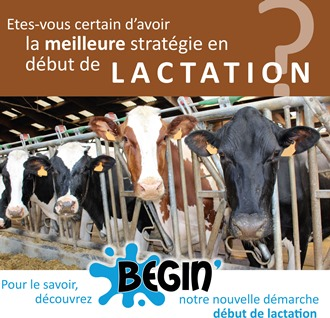begin vaches laitieres debut lactation primipares multipares